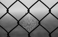 Chain Link Web
