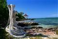 Oceans of Cuba