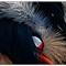 Various-Birds-2014-(93)