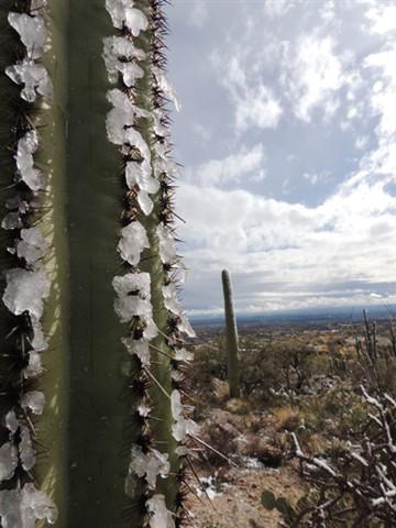 Sonoran Desert Snow 2013