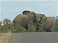 Dueling Pachyderms