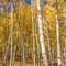 Colorado Autumn Color  K  285  09 22 2016