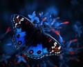 blue pancy