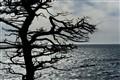 Tree by the Ocean