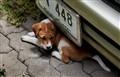 IMG_5925   puppy under a car 2