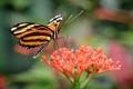 Butterflies_6270