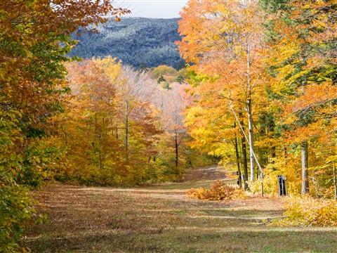 Autumn-Foliage-2