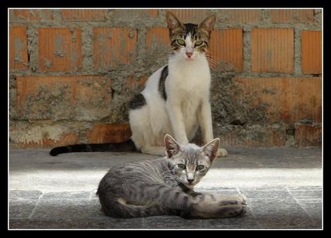 Malaga Cats