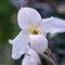 floral_36