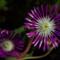 PurpleSomething_edited