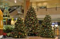 Changi Christmas Trees