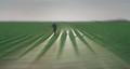 Irrigation worker, Salinas Valley
