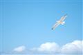 Lynyrd Skynyrd: FREEBIRD