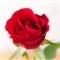 Roses 17 Feb 10_0005-Edit