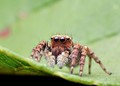 My Best Photo Of The Week: Jumping Spider