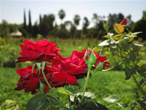 Bagh-e Eram Garden of Paradise Park Shiraz Fars Central Iran