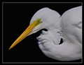 """The Great Egret"""
