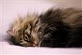 LolaSleeping
