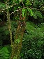 Regeneration in the Rainforest