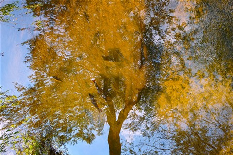 reflected tree