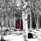 Birch trees-1120414_edited-2