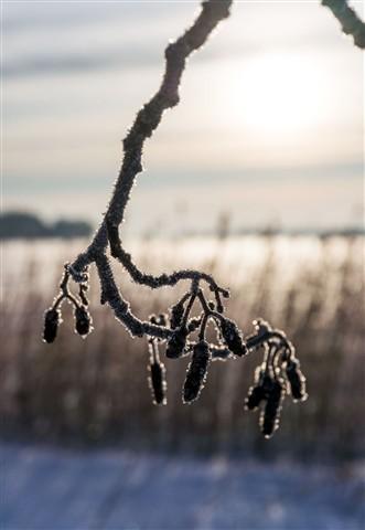 wintersun3