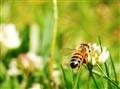 Bee on Beesiness trip