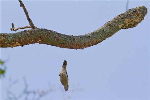 woodpecker2_800
