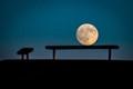Sitting Moon-5021