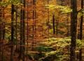 Sunlight reaching into the darker autumn forest