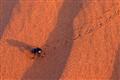 sand traveler / Namibia