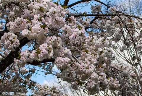 BlossomsClose