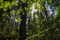 Swedish primieval forest