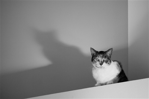 Contrast cat 4x6