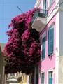 syros_flowers