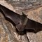 Bats_06222011_24_mod
