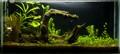 My Planted Home Fish Aquarium
