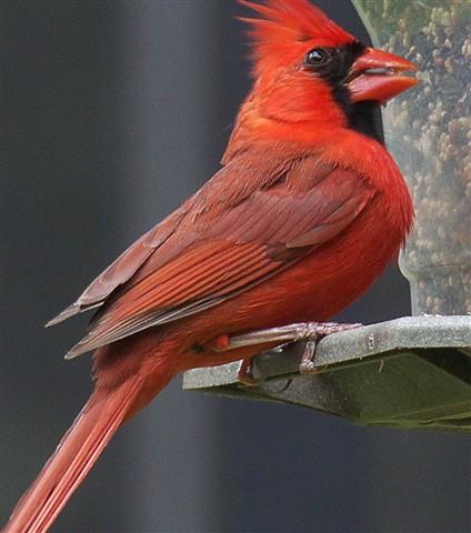 Cardinal 5-2013