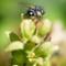 bugs_8-10-2016_34