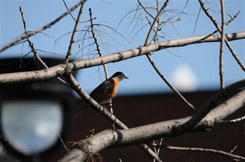 Oiseaux du dimanche matin 839