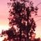 8.36.54 pm 9th December 2018: Sunset