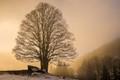 Sun Snow and Mist