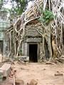 'Tomb Raider' Ta Prohm, Cambodia