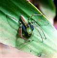 Madagascan spider