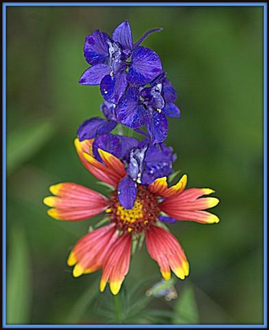 prettiest flower