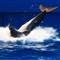Seaquarium Dolphin