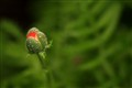 dew on spring bud