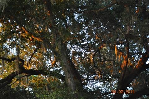 trees.1
