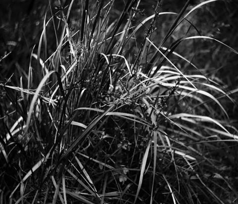 SDIM0940_Forest