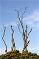Dead Limbs at Intaka Island